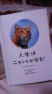 久しぶりの猫本見つけた〜画像