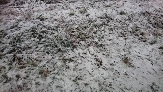 初雪(*´∇`)画像