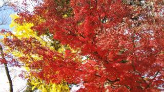 晩秋の紅葉🍁画像