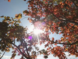 紅葉の季節画像