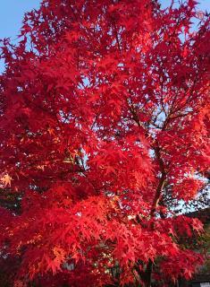 紅葉とお話画像