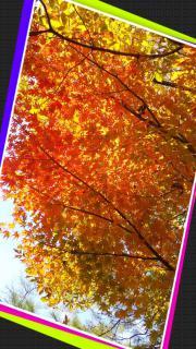 紅葉見てきましたよぉー✨画像