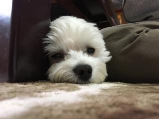 愛犬 04画像