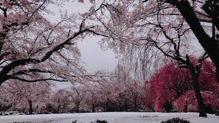 雪化粧画像