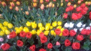 春ですねぇ・・・画像