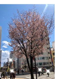 桜🌸です画像