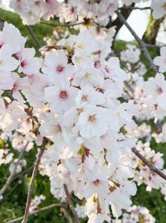 春の訪れ画像