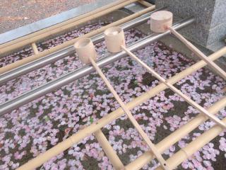桜の水面画像