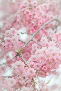 花は好き?画像