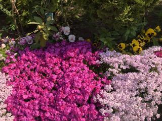 綺麗なお花⸜🌷⸝画像