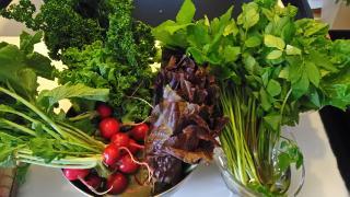 新鮮野菜♪画像