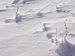 ✨暑いので雪の写真をお届け✨画像