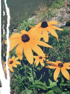 川辺に咲く花たちみたいに画像