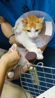 Operated cat画像