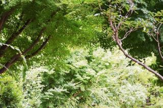 緑が綺麗 夏の森画像