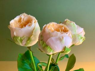 またお花です✩.*˚画像