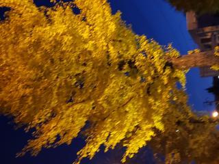 すっかり秋です♪2画像