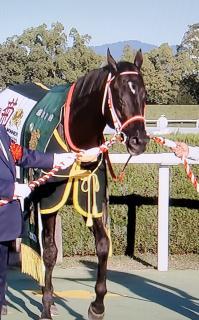コントレイル三冠馬になりました〜〜。画像