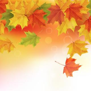 すっかり秋ですね。画像