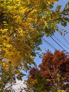 秋の風景画像