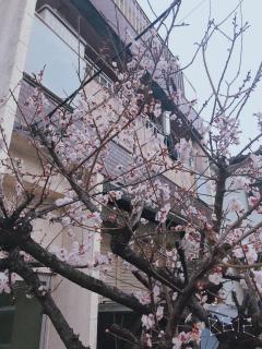 春が来た画像