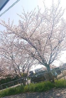 春!!画像