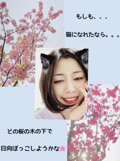 🌸桜満開、華満開🌸画像