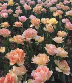 置かれた場所で咲きなさい。画像