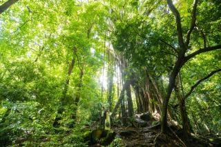 森の中とか画像