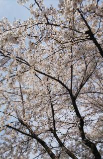春爛漫♪画像