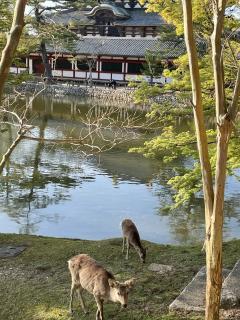 奈良県に行ってきました(*´꒳`*)画像