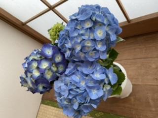 花のある暮らし…画像