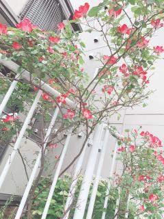 今日のお花🌸画像