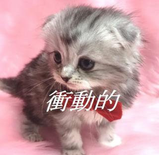 ★ねずみが猫を欲しがって・・★画像
