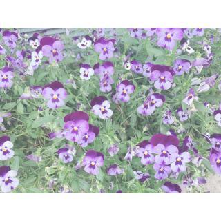 今日のお花☆