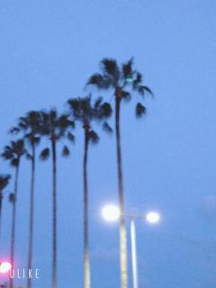 夜の散歩🌜画像