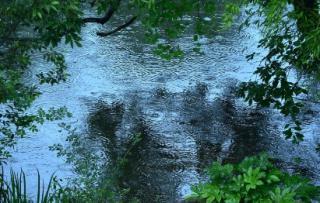 雨降り画像