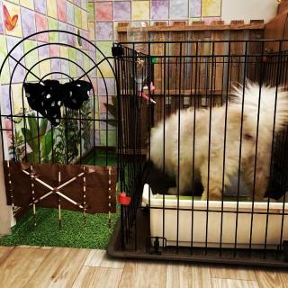 犬小屋リメイク画像