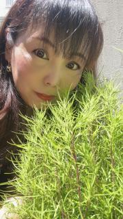 〜癒される植物〜画像