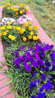 お花が綺麗🌺