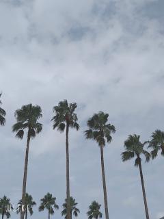 昨日の空(。•́︿•̀。)画像
