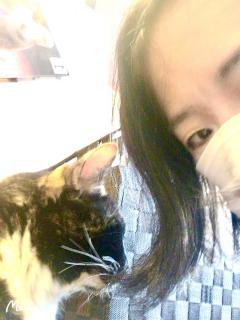 猫と茜画像