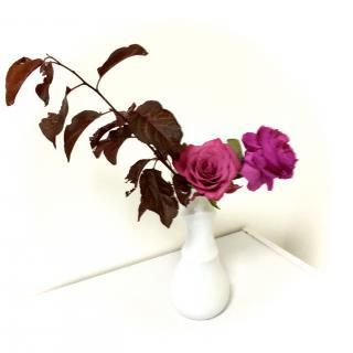 「☆茜☆色」の花たち画像