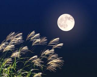 お月様画像