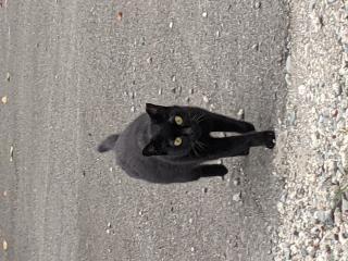 地域猫画像