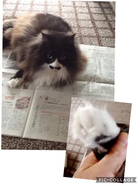 ゆみさんちの猫たち 〜モコくん〜