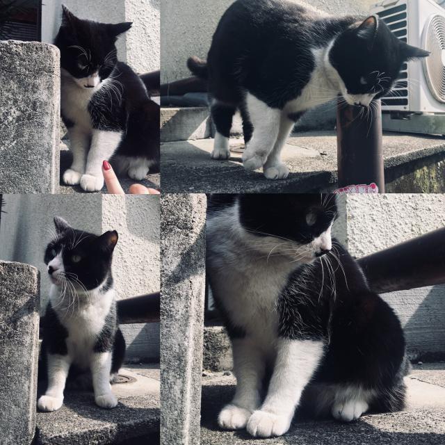 猫と話す🌼