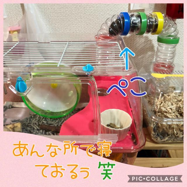 ペコちゃんで〜すぅ(//∇//)
