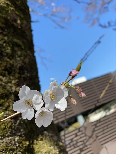 春は必ず(๑`ᗨ´๑)ڡ 来ますよ(✿´꒳`)ノ°