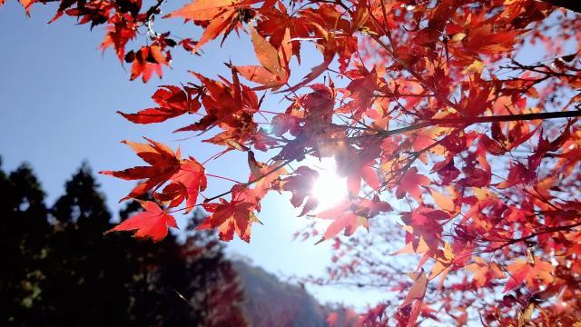 🍁秋の贈り物🍂